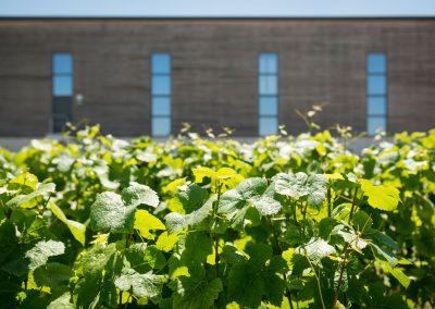 GNAT-Ingénierie-batiment-viticole-Coopérative-Mailly